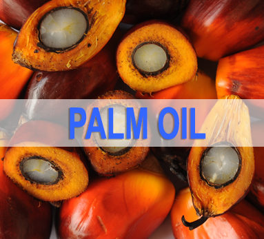 Palm Oil News