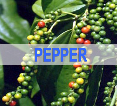 Pepper News